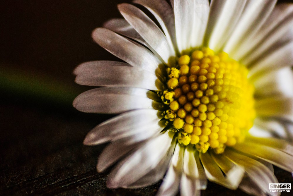 svadobny-fotograf-fotenie v prirode-zilina-cadca-knm-rajec-bytca-04